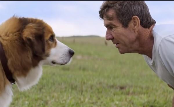 O ator Dennis Quaid em cena de 'Quatro Vidas de Cachorro' (Foto: Reprodução)