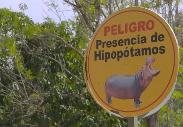 Hipopótamos de Pablo Escobar saem do controle e ameaçam moradores da Colômbia