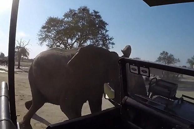 Elefante atacou veículo de safári em parque em Hwange (Foto: Reprodução/YouTube/NewsflareBreaking)