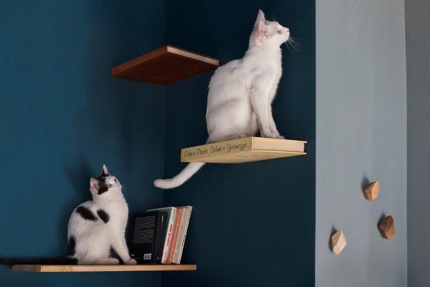 Roma tem café bistrô especial  para gatos (Foto: Francisco de Michelis)
