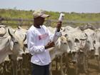 Vacinação de rebanho contra a febre aftosa é prorrogada no Pará