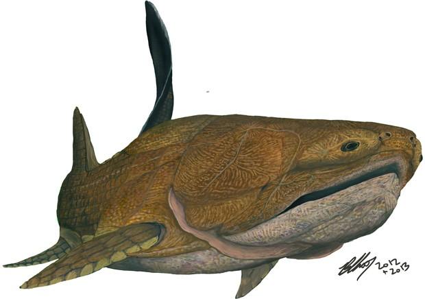 A concepção artística mostra o Entelognathus, um velho peixe cascudo que reescreve a história dos ossos da mandíbula humana.  (Foto: Brian Choo/Nature)
