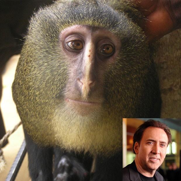 Sites viram semelhantes entre o macaco-lesula e o ator Nicolas Cage. (Foto: Reprodução)