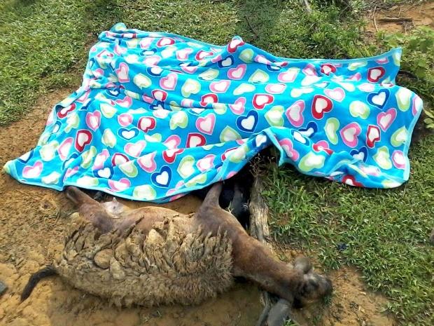 De acordo com o Corpo de Bombeiros, a mulher foi atingida quanto tentava recolher uma ovelha com dois filhotes (Foto: Êduard Motta/Rondônia Vip)