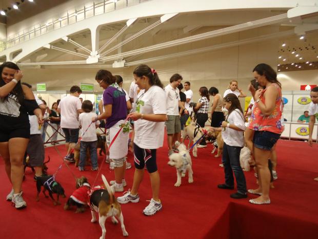 Cão (Foto: TV Verdes Mares/Reprodução)