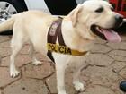 Cão da Polícia Militar encontra droga na bolsa de mulher em Balbinos