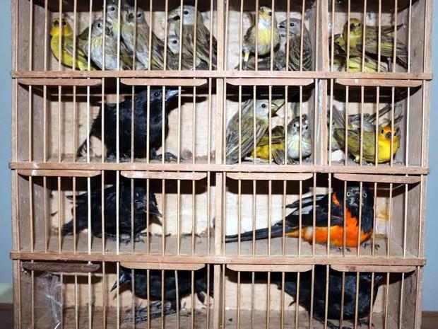 Polícia Ambiental apreendeu 25 aves silvestres dentro de ônibus no Espírito Santo (Fot Divulgação/ Polícia Ambiental do ES)