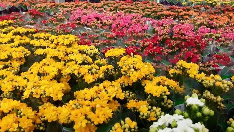 flores_jardim (Foto: Divulgação )