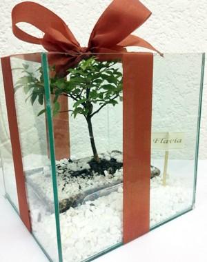 O bonsai que padrinhos e madrinhas vão ganhar (Foto: Arquivo Pessoal)