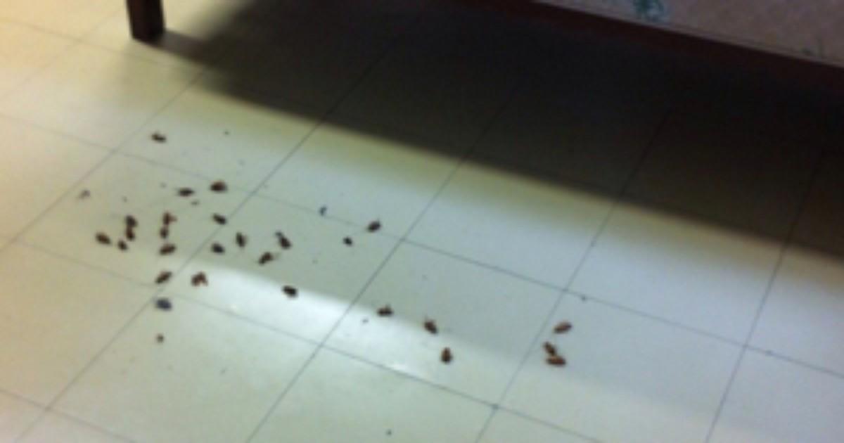 Hospital da Santa Casa é invadido por baratas, dizem funcionários - Globo.com