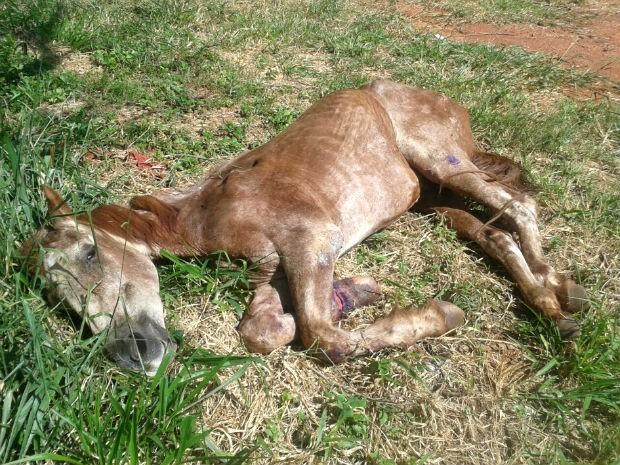 cavalo uberlândia (Foto: PM Meio Ambiente/Divulgação)