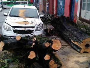 Árvore carro estacionado e outro que passava pela rua Snta Cruz, no Centro de Sorocaba  (Foto: Emílio Botta/G1)