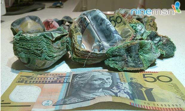 Dinheiro que foi escondido no forno foi assado por engano na Austrália (Foto: Reprodução)