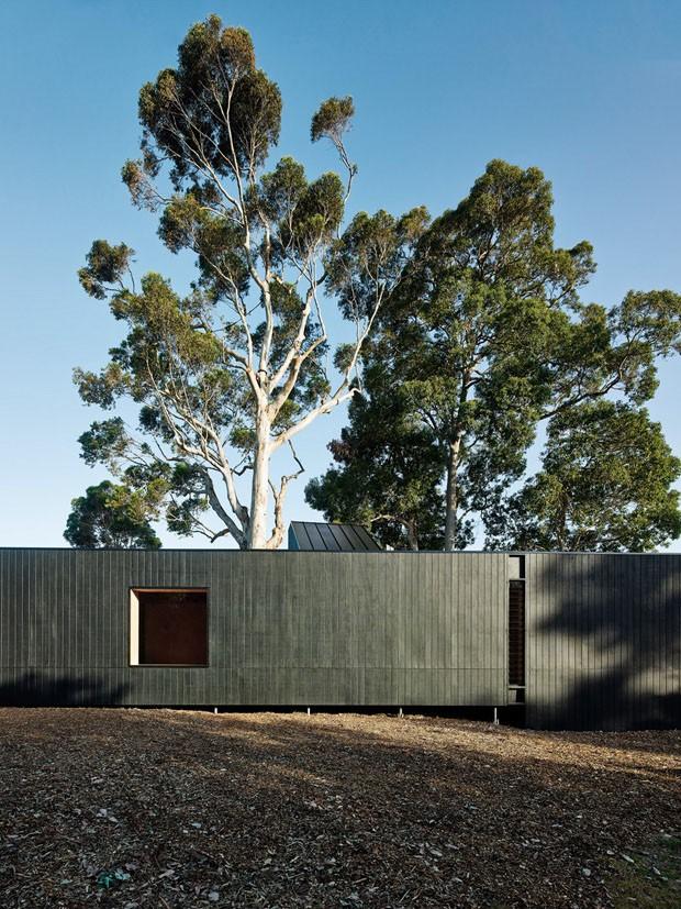 Casa ao redor do eucalipto (Foto: Divulgação)