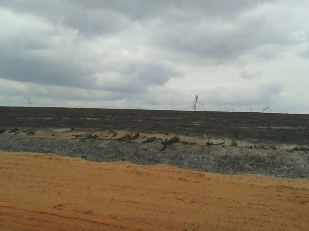 Incêndio destruiu grande área em Borebi (Foto: Thaís Andrioli/TV TEM)