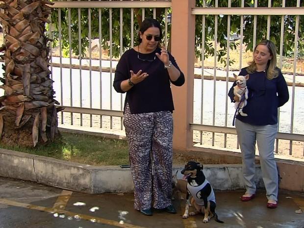Síndica manda tirar cão de prédio por suposta mordida; dona nega ataque em Goiás (Foto: Reprodução/TV Anhanguera)
