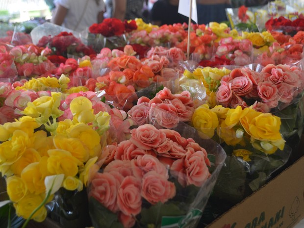 flores, festival, holambra, espécies, plantas, Macapá, Amapá (Foto: Jéssica Alves/G1)