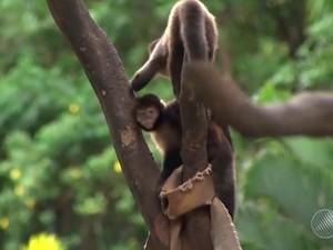 Caso de febre amarela foi registrado em macaco no bairro de Vila Laura, em Salvador (Foto: Reprodução/ TV Bahia)