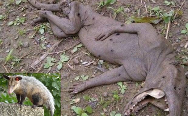 Criatura teria sido encontrada em San Antonio de los Altos, na Venezuela (Foto: Reprodução/Live Leak/mysteryhistorytv e Wikimedia Commons)