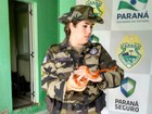 Cobras exóticas são encontradas dentro de embalagem dos Correios
