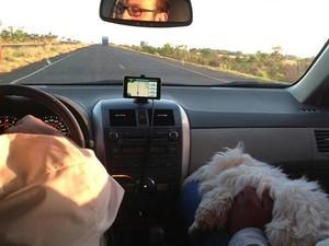 cachorra Maltês Babi de Uberlândia (Foto: Reprodução)