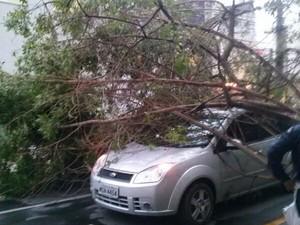 Árvore caiu em carro no bairro Pelinca. (Foto: Gláucia Santos/Arquivo Pessoal)