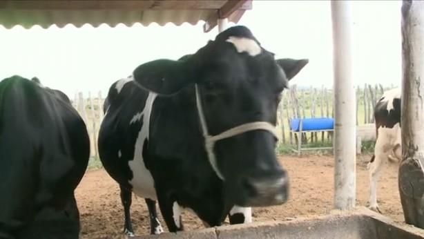 Globo Rural destaca trabalho dos paraibanos para recompor rebanho (Foto: Reprodução)