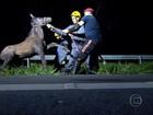 Motociclista morre após atropelar cavalos na MG-424, na Grande BH