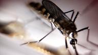 Ovos do Aedes podem sobreviver até 18 meses sem contato com a água