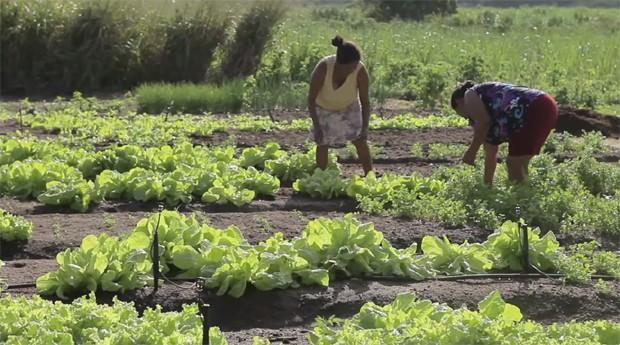 Sustentabilidade ajuda qualquer tipo de empreendedor  (Foto: Reprodução )