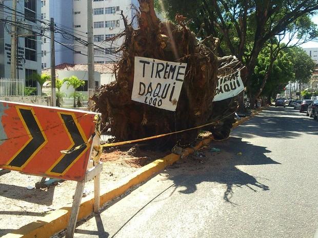 Raiz de árvore que caiu no dia 6 de março, no centro de Natal, ainda não foi retirada. (Foto: Fred Carvalho/G1)