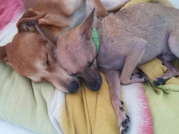Graziela Souza cuida de vários cãozinhos que vivem juntos no apartamento dela (Foto: Graziela Souza/Arquivo Pessoal)