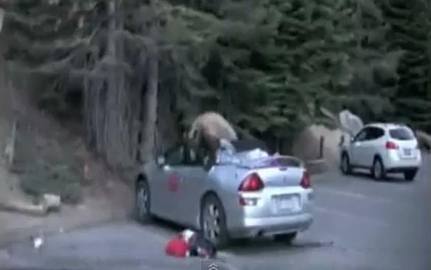 Urso foi filmado vasculhando atrás de comida no banco de trás de um conversível. (Foto: Reprodução)