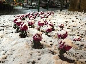Flores cobertas por neve em canteiro de Caxias do Sul (Foto: Guilherme Pulita/RBS TV)