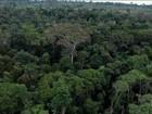 Temer veta MPs que reduzem área protegida de floresta no Pará