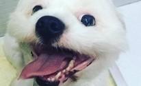 Polícia começa a investigar morte de cachorro em pet shop de Mogi (Nathália Rong/ arquivo pessoal)