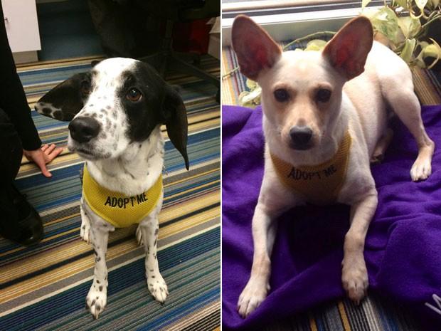 Hotel fez parceria com abrigo e pretende dar um lar para 100 cães abandonados até o fim de 2015 (Foto: McKibbon Group/Divulgação)