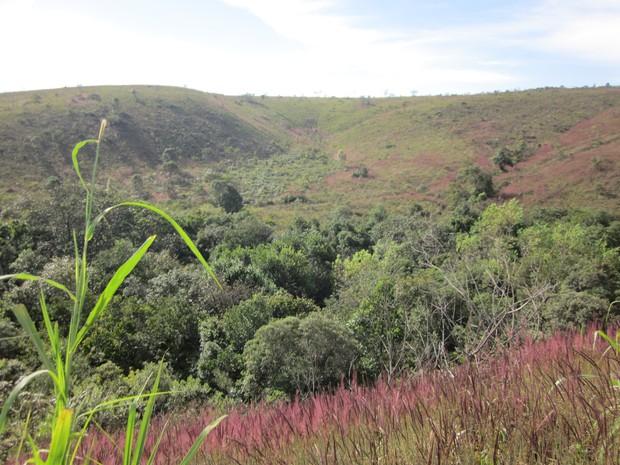 Invasão de capim-meloso já atingiu até 50% da área do Parque Estadual da Serra do Rola-Moça. (Foto: Divulgação)