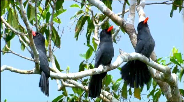 A beleza e os cantos das aves na Reserva Palmari  (Foto: Reprodução EPTV/Terra da Gente)