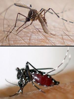 A Bahia registra 33 casos de Chikungunya em 2014