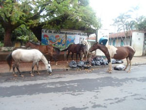 cavalos reviram lixo no bairro candida camara (Foto: Cida Santana/G1)