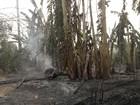 Devido à estiagem, Femarh suspende calendário de queimadas em Roraima