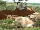 Queda de raio causa a morte de 30 animais de propriedade no Paraná