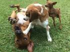 Amor para cachorro! André Marques e Fê Lima falam da paixão por 'filhos' caninos