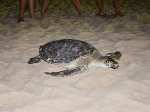 Animal ainda estava vivo, mas morreu pouco tempo depois (Foto: Walter Paparazzo/G1)