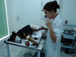 Policiais viajaram 65 km para que cadela fosse atendida em clínica especializada em Ribeirão Preto (Foto: Divulgação/Polícia Ambiental)