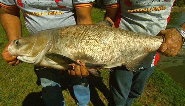 Essa espécie vive em rios e lagos de água doce (Foto: Arquivo TG)