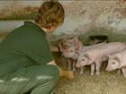 Pesquisas apontam que bem-estar animal influencia na qualidade da carne