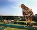 Falcão é o protetor das quadras de Wimbledon e suas tradições britânicas