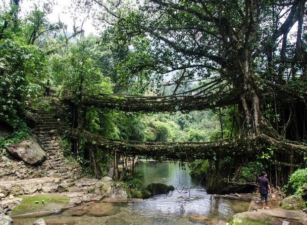 ponte-feita-com-plantas (Foto: Ashwin Kumar/CCommons)
